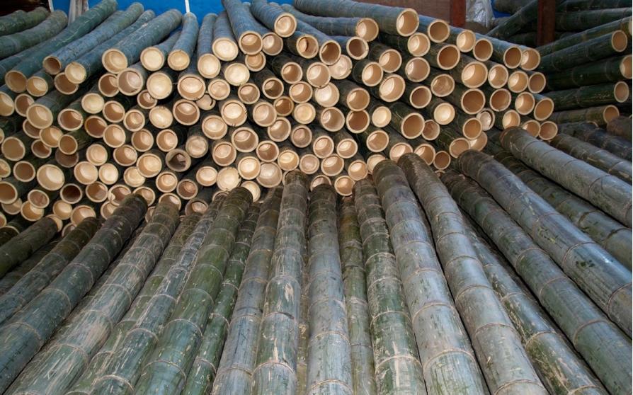 Luồng là loài tre trúc có nhiều đặc tính quý của Việt Nam